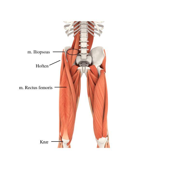 Ondt-paa-forsiden-af-hoften-loebeskade